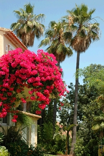Villa with 2 guesthouses for sale - Marbella - Benahavis 8